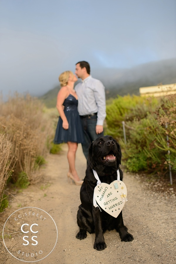 crystal-cove-engagement-pictures
